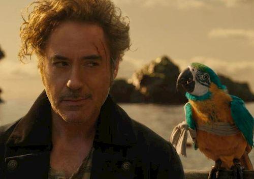 man staring at parrot on his shoulder