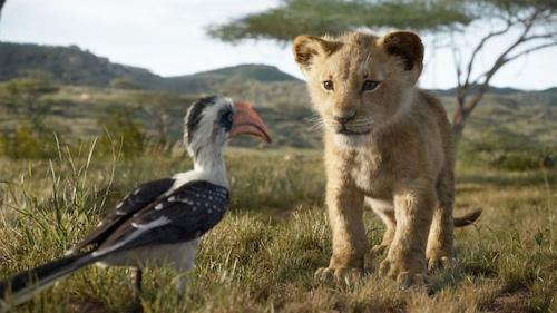 lion cub looking at bird